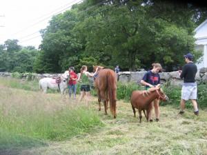 setting up pony rides