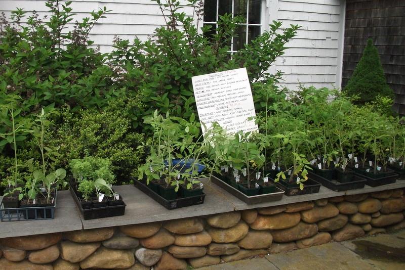 Nancy's fabulous seedlings are ready.