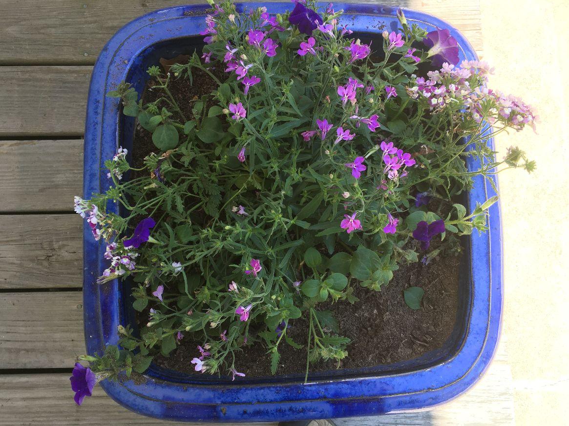 2021 porch flowers 2