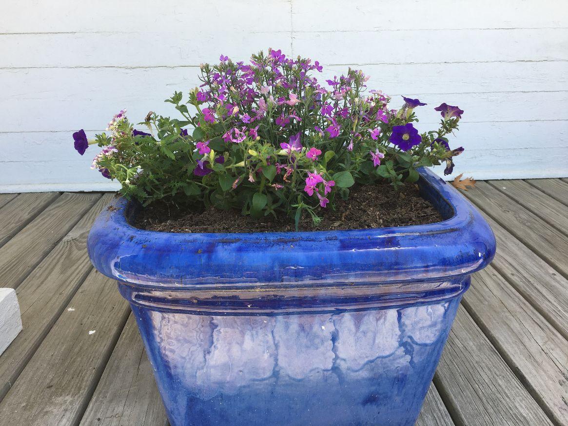 2021 porch flowers 3